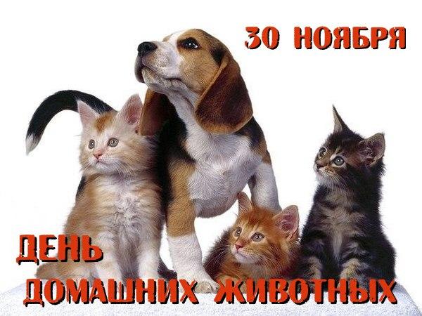 Животные – наши друзья!